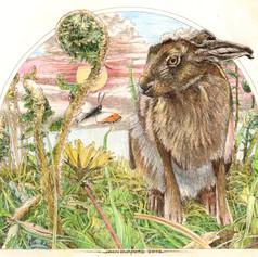 hare and orange tip