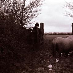 sheep_moving