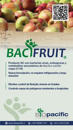 bacifruit-manzanas