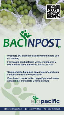 bacinpost-uvas