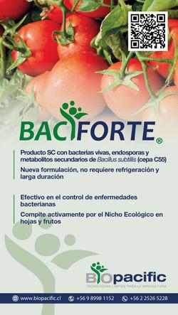 bacifirte-tomate
