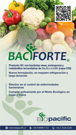 baciforte-verduras