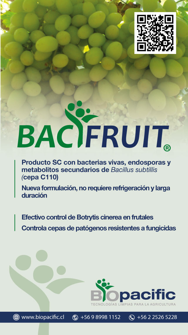 bacifruit-uvas