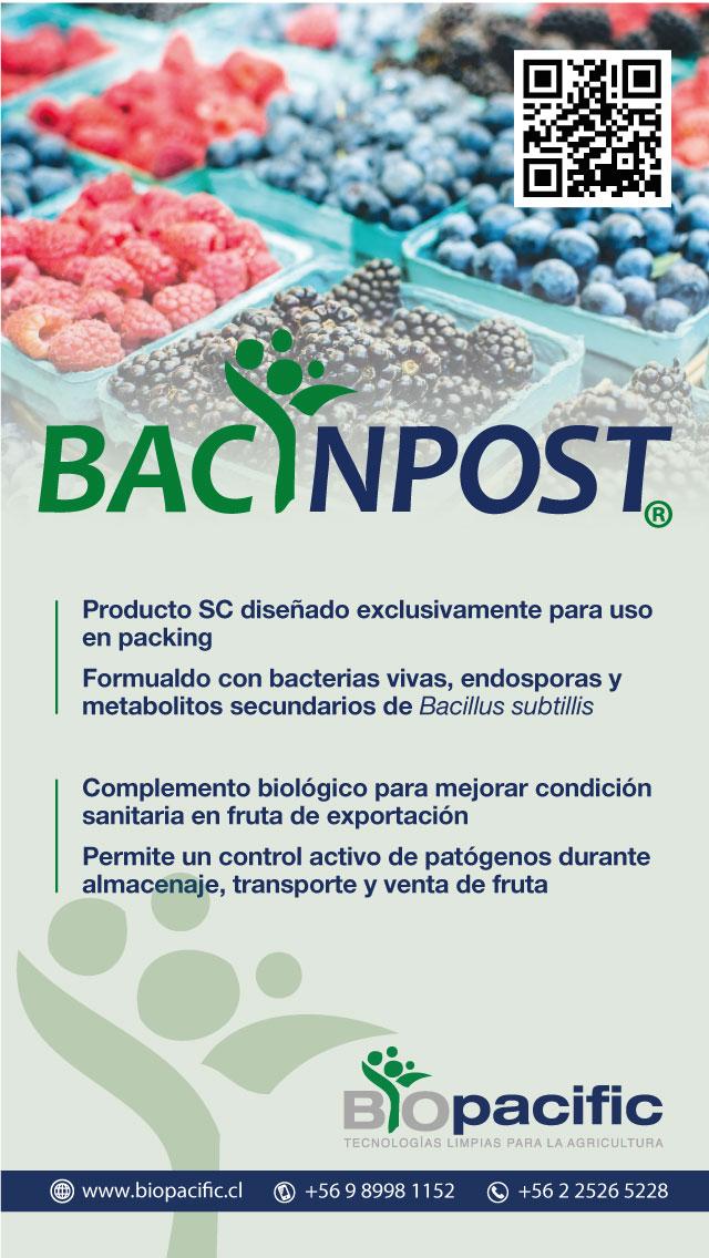 bacinpost-berries