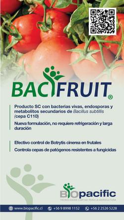 bacifruit-tomates