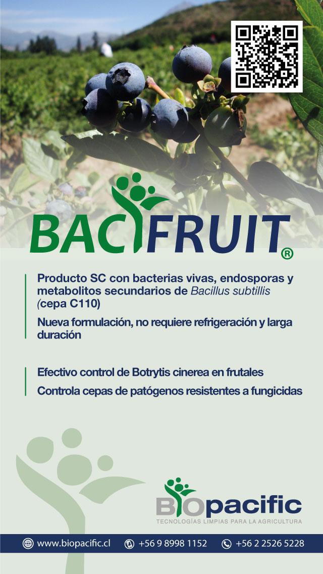 bacifruit-arandanos