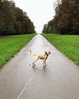 Solo walk.jpg