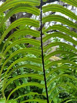 PlantSpores1