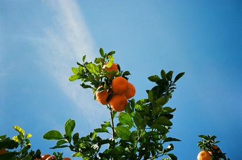 Southwest Citrus