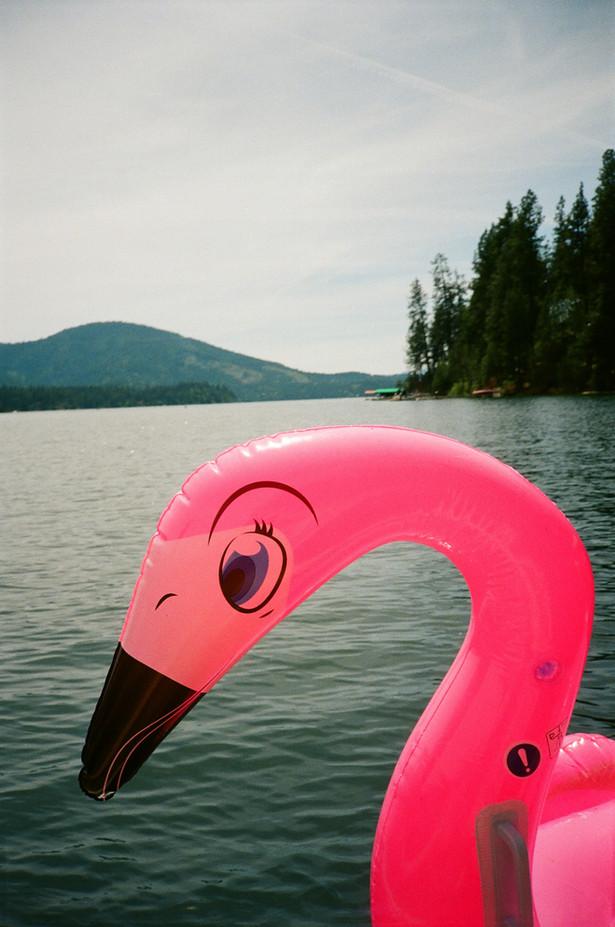 Northern Freshwater Flamingo