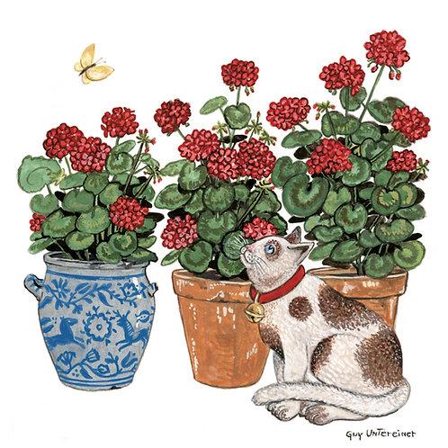 Géraniums et chat
