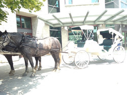Carriage 2.8
