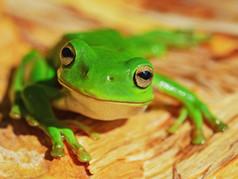 Was hat die Geschichte vom Frosch mit Zuckerfreiheit zu tun?