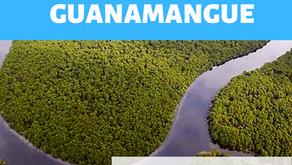 Projeto Guanamangue: conheça o novo trabalho do Instituto Onda Azul
