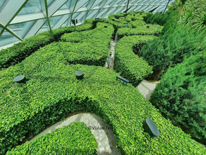 Is it worth taking the kids to Jewel Changi Airport's Hedge Maze?
