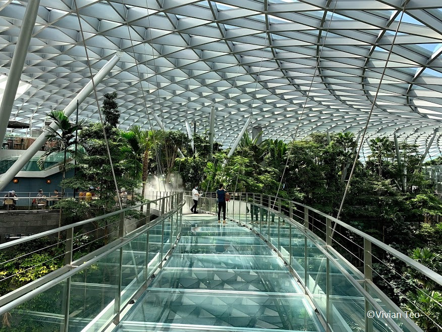 Canopy Bridge Jewel Singapore Changi Airport
