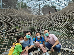 Is it worth taking the kids to Canopy Bridge and walking sky net at Jewel Singapore?