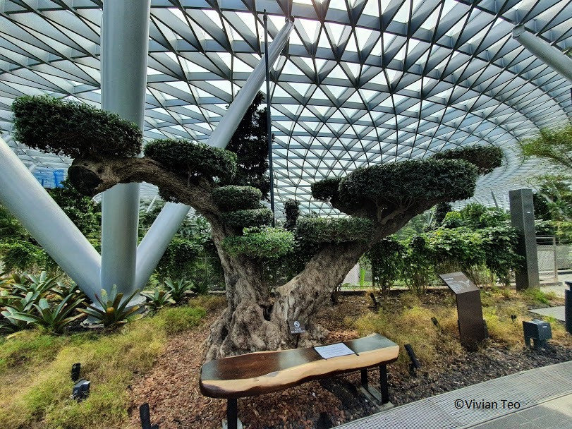 Canopy Park Jewel Singapore Changi Airport