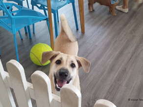 Why we went to pet café Ménage Café and loved it (though we have no dog)