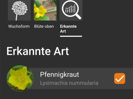 Pflanzen bestimmen – mit Foto und App