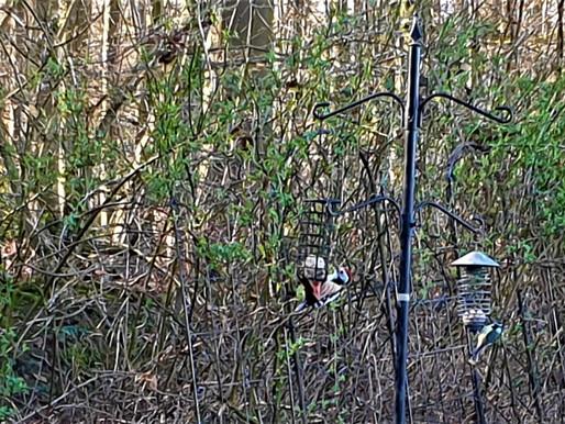 Naturbeobachtung: Welcher Vogel ist das? Upload eines Fotos auf Internetplattform