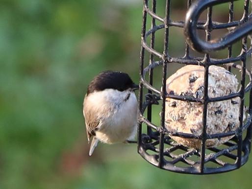 Vogelzählung – App zur Vogelbestimmung
