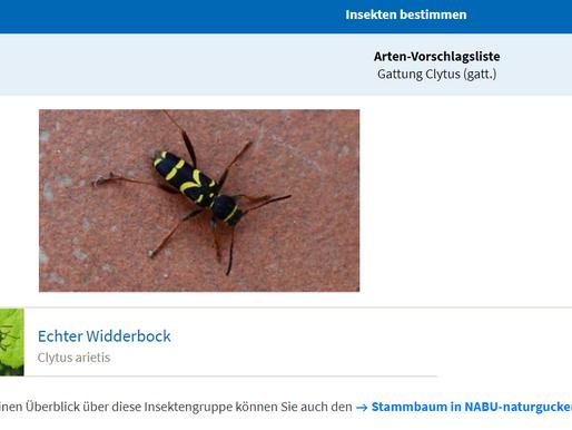 WEB-App: Bestimmung von Insekten mit Foto