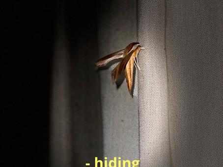 "New Single: ""Hiding"" by Parrotfish"