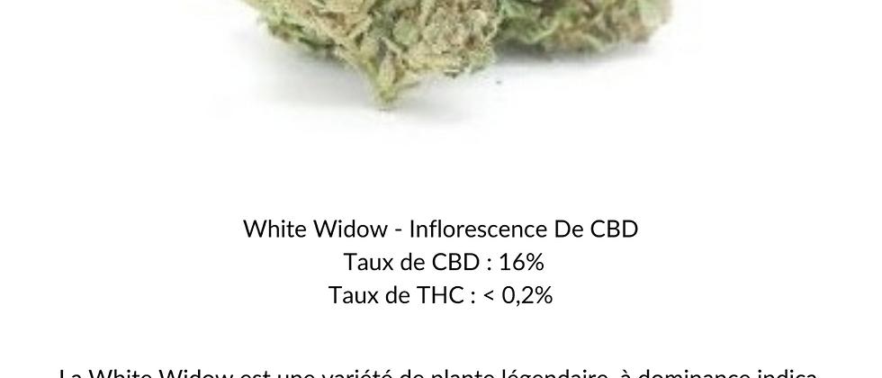 White Widow - Inflorescence de CBD (INDOOR)