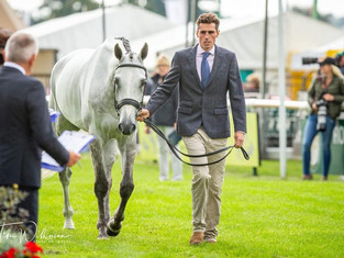 Day 1 - Trot Up
