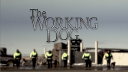 Working Dog Title