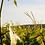 Thumbnail: Bourgogne, Chardonnay, Domaine Francois Carillon 2017