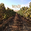 Thumbnail: Wente 'Morning Fog' Chardonnay Livermore Valley 2018
