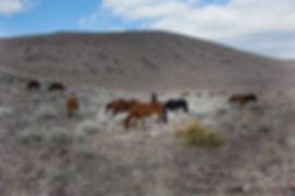HorsesGroup1.jpg