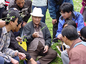 Practice of Traditional Tibetan Medicine