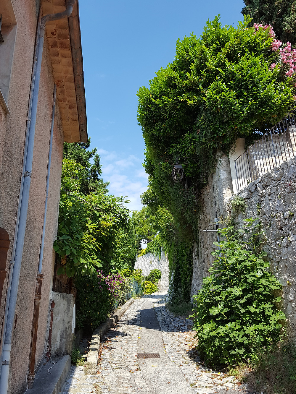 My run begins on a cobblestone road. Someday I will have a bubblegum pink Fiat 500 that I'll drive up narrow streets like this.