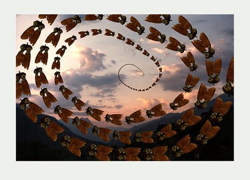Jane Sampson 'Seed Flies' Archival Inkjet 30 x 42c4