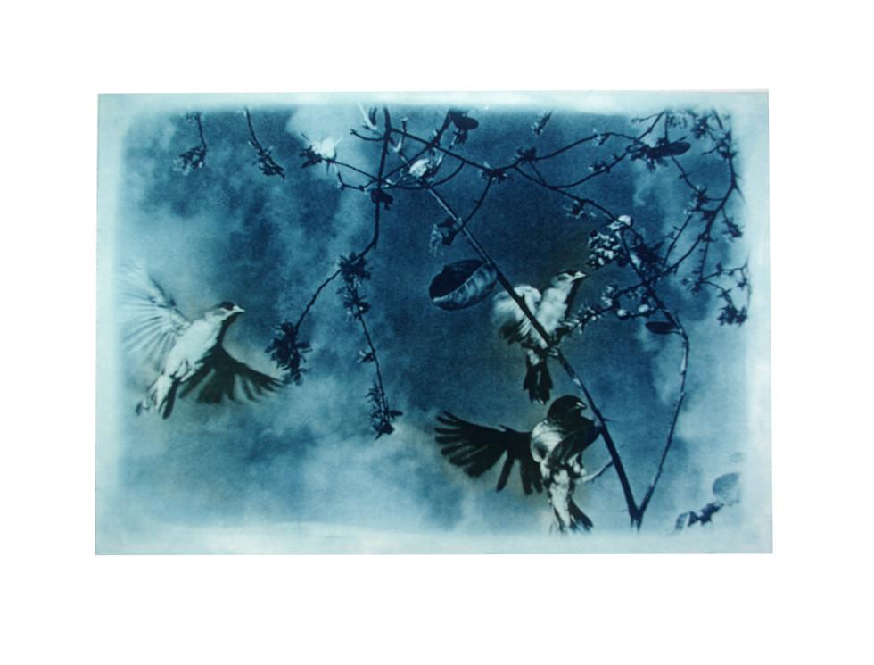 Jane Sampson Photo etching 'Finches'  30 x 21cm Edn 20
