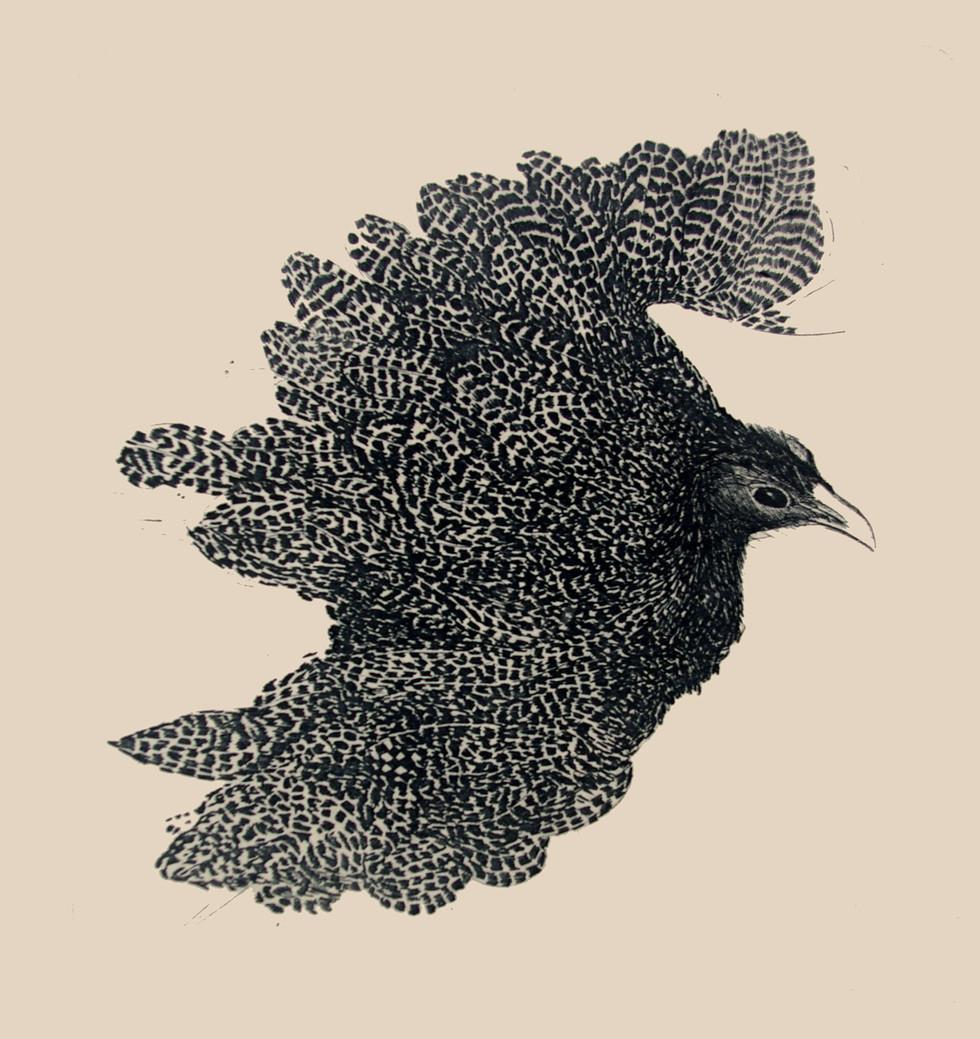 Jane Sampson 'Bird' Photo etching  21 x 30cm Edn 20