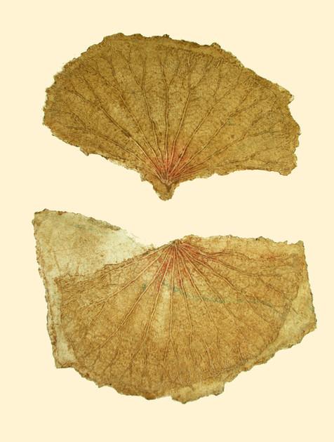 Jane Sampson 'Lotus Leaves' Collagraph 56 x 76cm edn 15