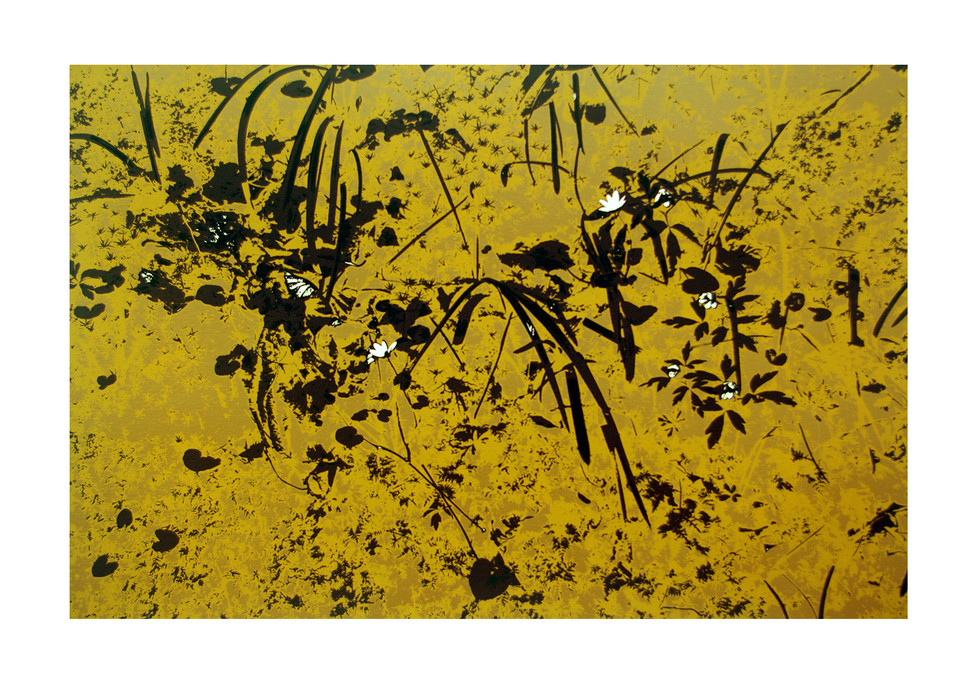Jane Sampson 'Shade and Moss' Silkscreen 76 x 56cm Edn 20