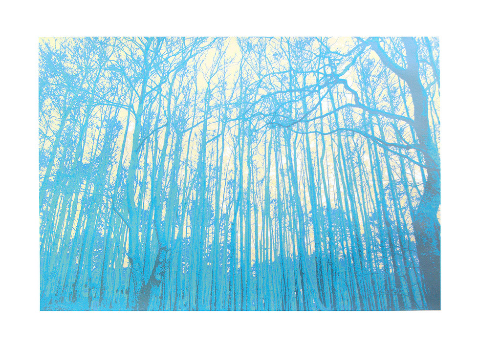 Jane Sampson 'Woods' Silkscreen 56 x 76 cm Edn 20