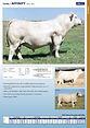 05_20 WWS A Beef Catalog_individual bull