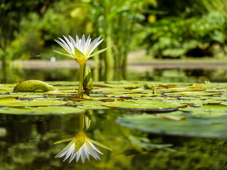 Ali je meditacija in duhovni razvoj eno in isto?