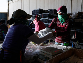 Trump Deems Farmworkers 'Essential' But Not Safety Rules for Them. That Could Threaten the F