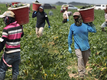 Protecting Farmworkers from Coronavirus and Securing the Food Supply
