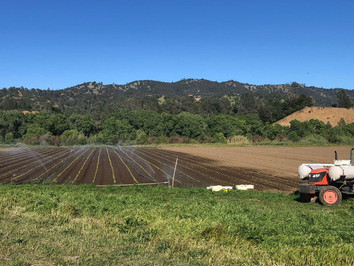 As Food Supply Chain Breaks Down, Farm-To-Door CSAs Take Off