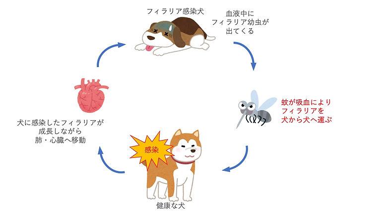 フィラリア症 説明1.jpg