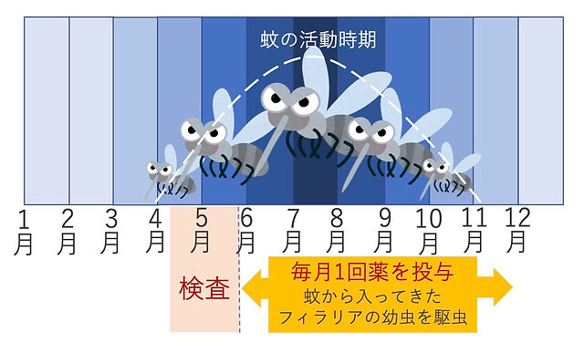 フィラリア症 説明2.jpg