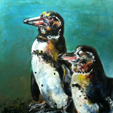 Galapagos Pinguin